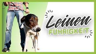 LEINENFÜHRIGKEIT ▶︎ 3 einfache Tipps wie es dein Hund schnell lernt