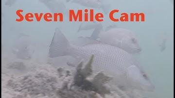 Seven Mile Bridge Underwater Cam