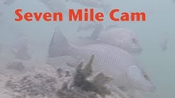 Seven Mile Bridge Underwater Cam