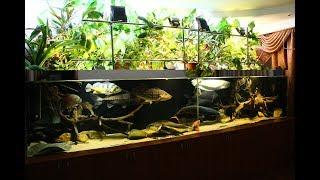 Замена песка в аквариуме на 2500 литров