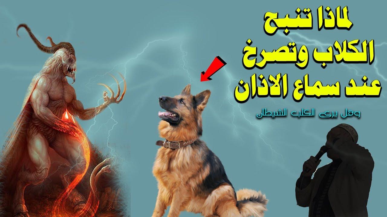 لماذا تنبح الكلاب وتصرخ عند سماع الاذان وهل يرى الكلب الشيطان إجابة ستصدمك Youtube