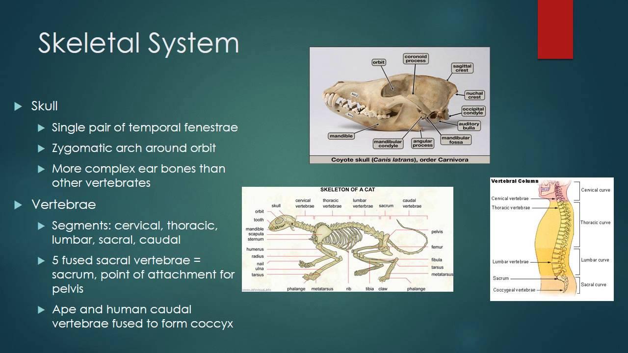Mammal Physiology - YouTube