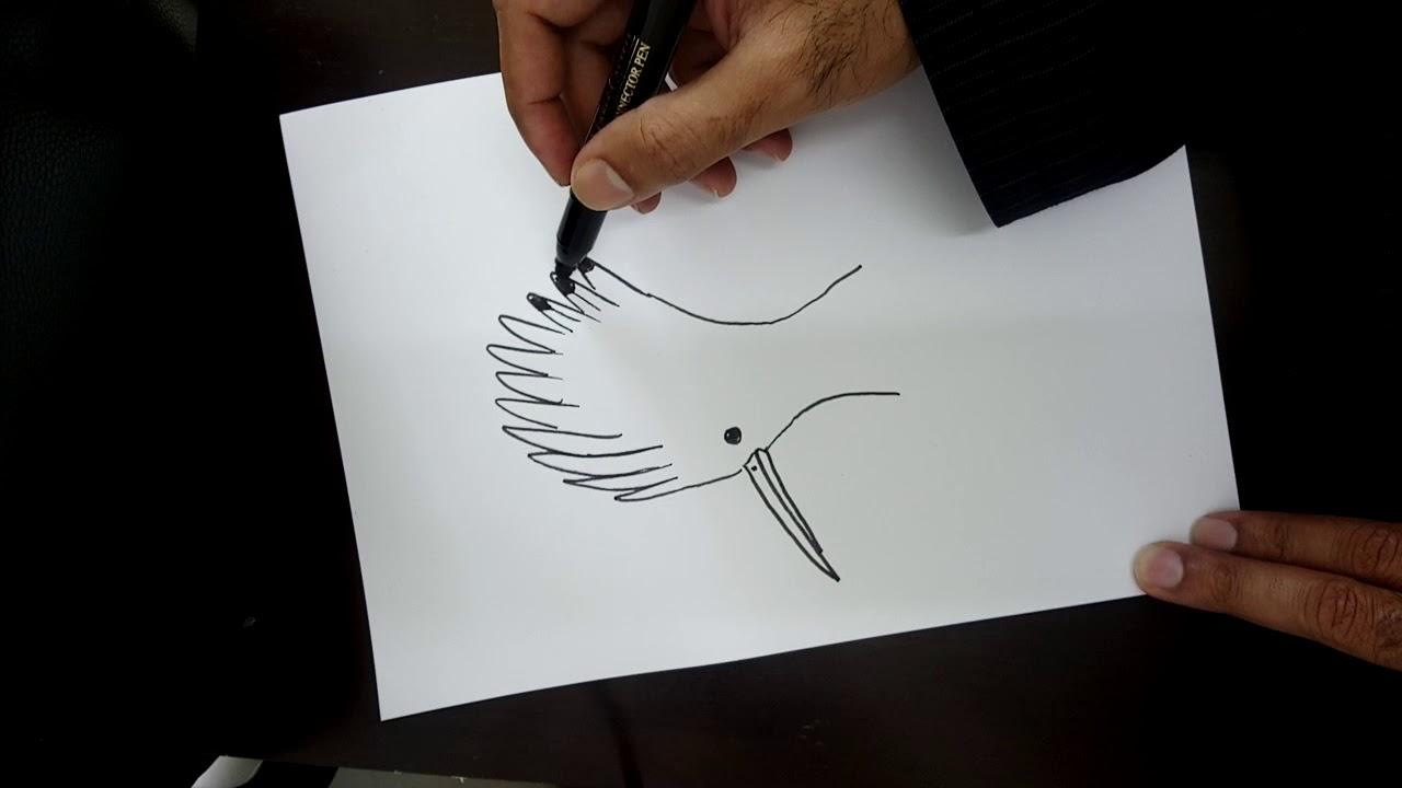 تعلم رسم الهدهد Learn To Draw A Hoopoe Youtube
