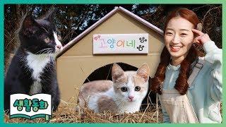 [생활동화] 길고양이 보살피기 ㅣ 캐리앤 북스