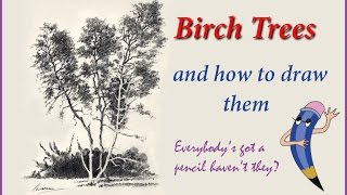 Birch Trees and how to draw them