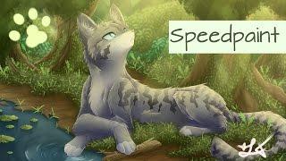 Speedpaint - Warrior Cats Jayfeather/ Häherfeder
