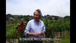Intervista al Professor Luigi Moio dell'azienda vinicola Quintodecimo