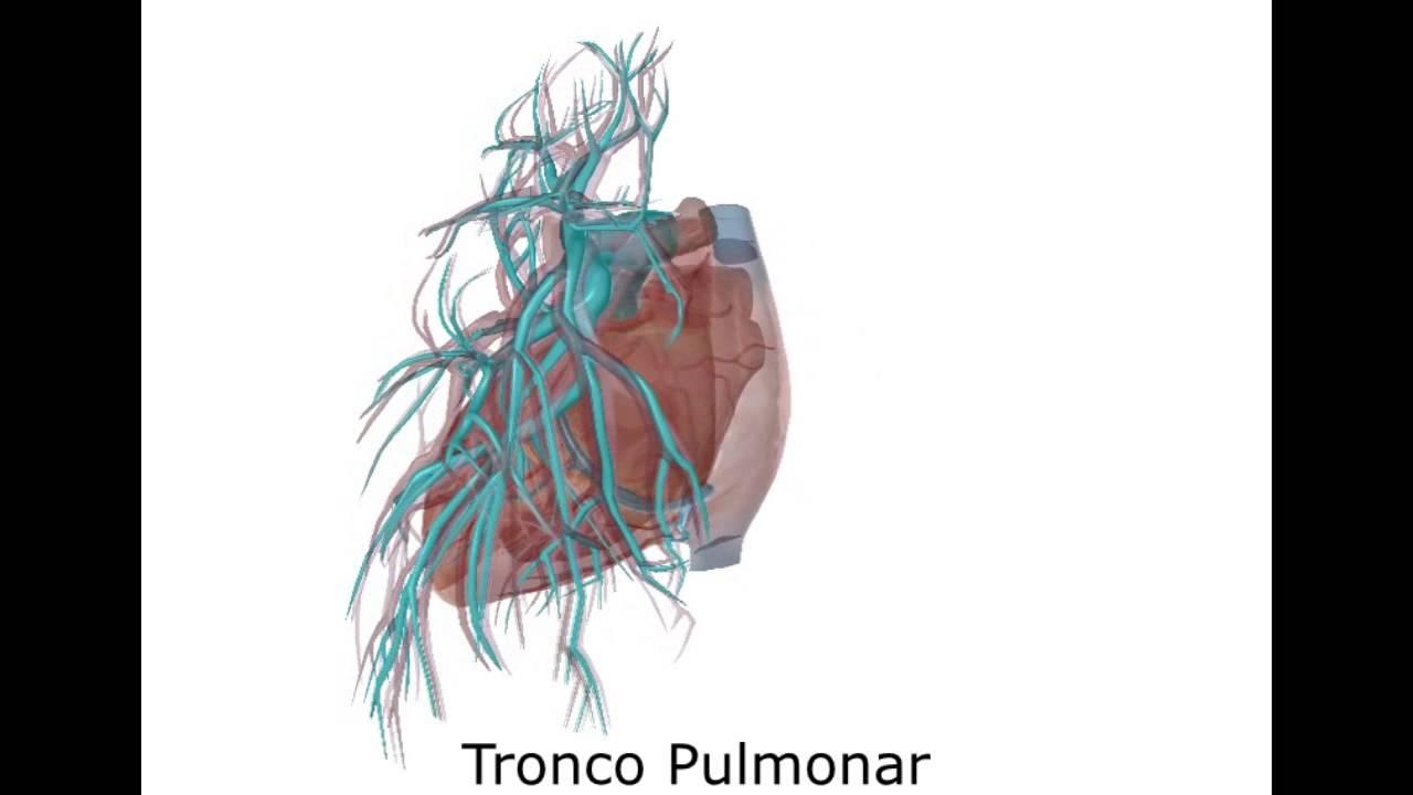 Tronco Pulmonar - YouTube