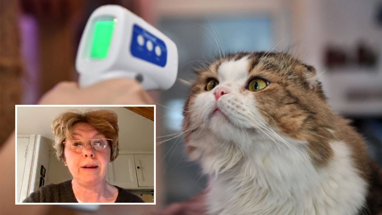Pet cat in UK catches Covid from its owners