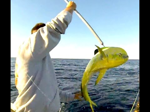 Mahi Amberjack And Cobia Fishing Offshore Of Hatteras