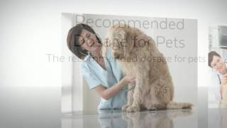 Tramadol 50mg Side Effects for Pets