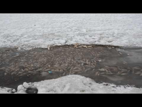 жилмассив фото новосибирск юго-западный