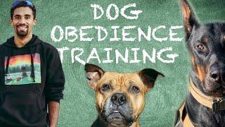 Five Fundamentals of Dog Training