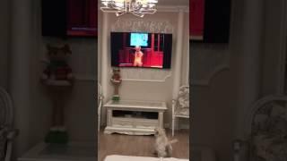 Собака смотрит как собака смотрит телевизор