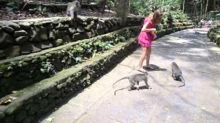Голодные обезъяны нападают на беззащитную девушку