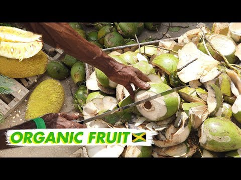 🇯🇲 Organic Farmers Market in Jamaica - Kingston |  Vlog Jamaica 2019 Ujima Natural Farmers Market