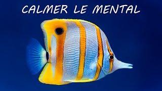 Calmer: Musique Douce et Scènes de Fond de L'Océan