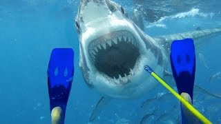 Diver Fights off Monster Great White Shark