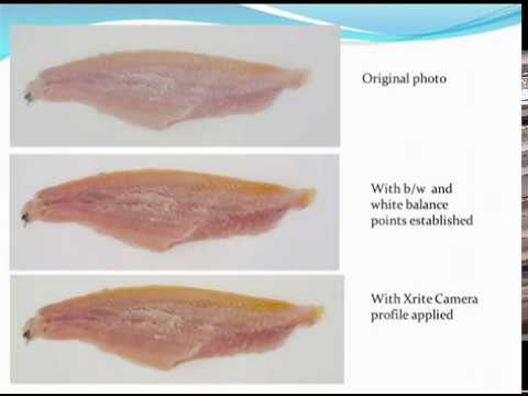Why Are Catfish Fillets Different Colors: Catfish Fillet Color Standards