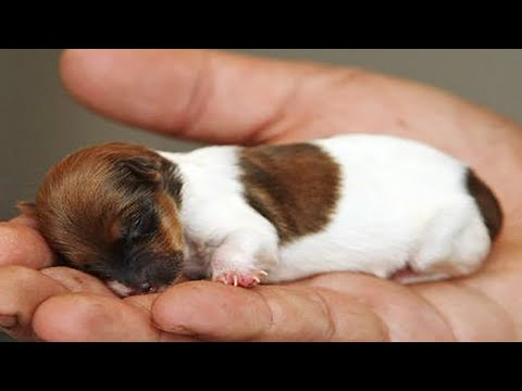 AWW CUTE CHILD ANIMALS Videos Collection prettiest moment of the animals 2020 - Soo Cute! # 60 - NewsBurrow thumbnail