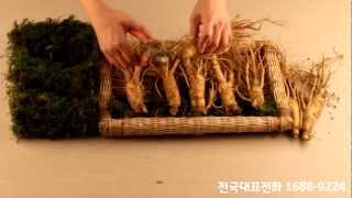 고려 6년근 홍삼 인삼 선물세트 포장과정