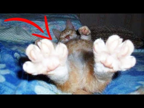 Top 10 Weird CAT BEHAVIORS Explained