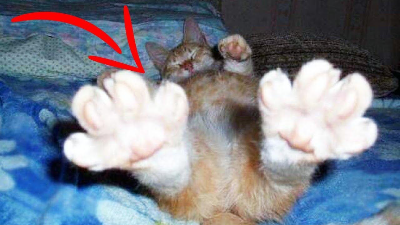 cat curling gif