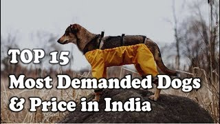 15 Most demanded dogs and Their Price in India