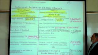 AUTONOMIC NERVOUS SYSTEM; PART 2 by Professor Fink.wmv