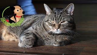 Мочекаменная болезнь у котов. Кот писает кровью!