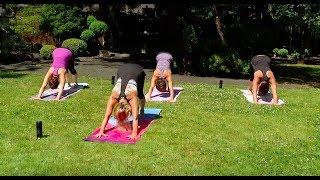 Ahimsa Yoga with Jan Norman Ep. 6 - Sun Salutation