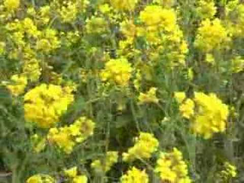 Edible Weeds Youtube