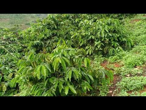 Bán Đất Đăk Nông 1,5 ha + 3 sào ruộng. Giá 700 triệu. LH 0972158358/(Đã Bán)