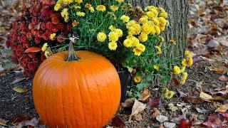 "Peaceful music, Relaxing music, Beautiful Instrumental Music ""Beautiful Autumn Morning"" by Tim Janis"
