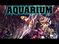 The BEST aquarium in the UNITED STATES?  Fish, alligators, snakes, buffalo, history, it's CRAZY!