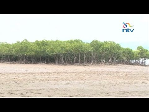 Destruction of mangrove ecosystem affecting marine life at Tudor and Makupa creeks