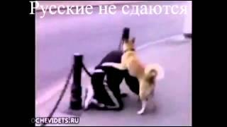 Русские не сдаются !!!