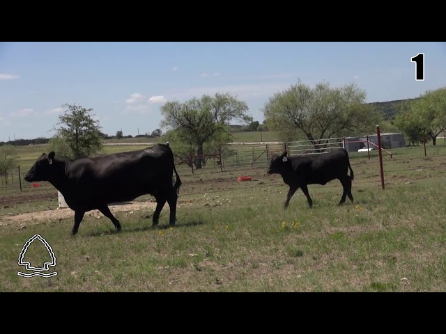 Pearcy Angus Ranch Lot 1