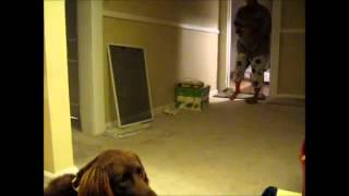 Ohio Dog Trainer - Obedience Dog Training : Down   Stay Command