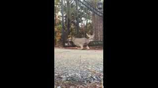 Garry The BullDozer Man Rescue a Deer from a Gate Spur Master