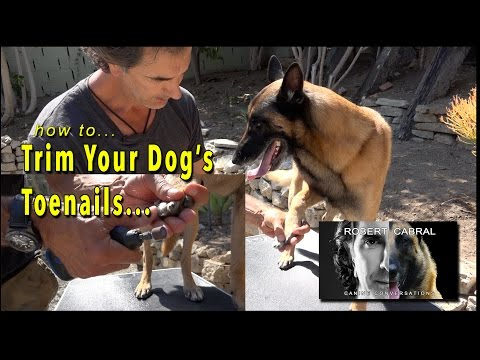 Trimming Your Dog's Nails - Grooming Your Dog for Health and Hygiene - Dog Training and Health