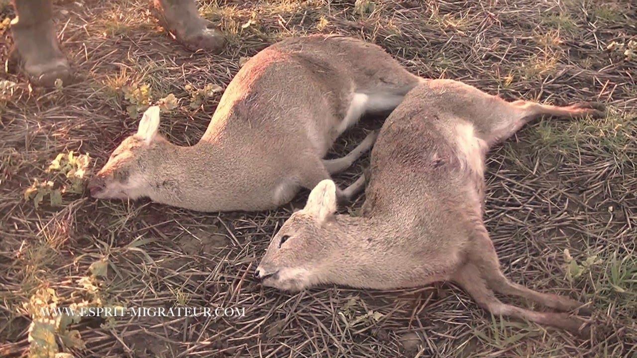 Asian deer hunter kills