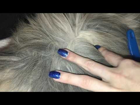 dandruff-lovers!-picking-and-scratching-loads-of-dandruff-from-cat-fur!