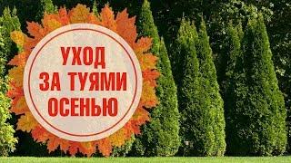 видео Уход за газоном осенью и подготовка к зиме