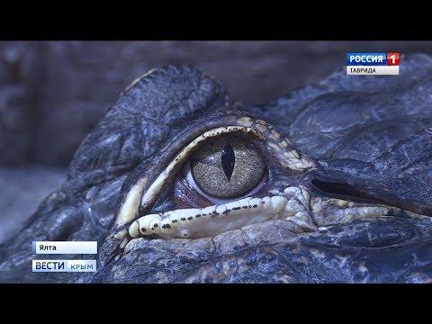 Откуда в Симферополе появились отрубленные головы крокодилов