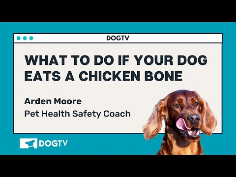 What To Do When My Dog Eats A Chicken Bone? DOGTV Answers With Arden Moore
