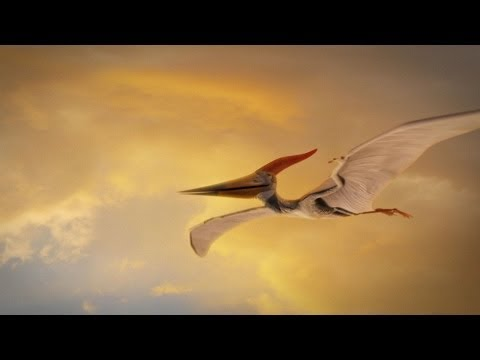 How Were Pterosaurs Adapted for Flight?