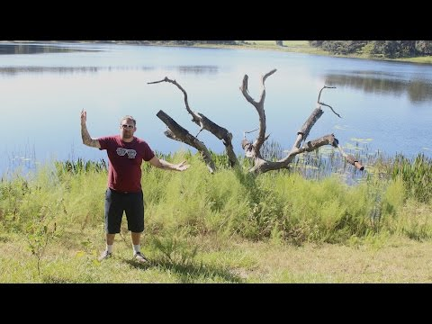 I Found The MY GIRL Willow Tree ! ABANDONED Movie Location