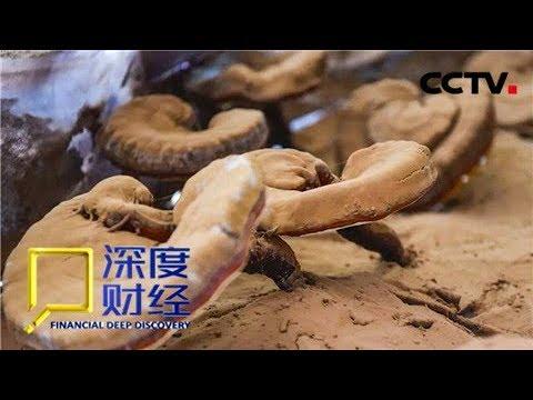 《深度财经》 中医药产业的蓝海 灵芝种植学问多 20181124 | CCTV财经