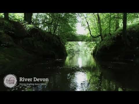 Fishing Around The Forth - Devon Angling Association - River Devon